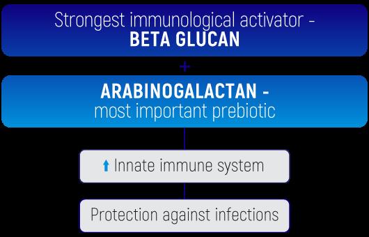 Solefarin tabula betaglikāns un arabino ENG.png