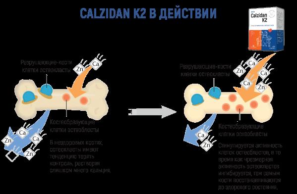 Calzidan-K2-web-materiali-22.png