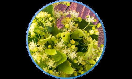Gripostop-linden-blossom.png