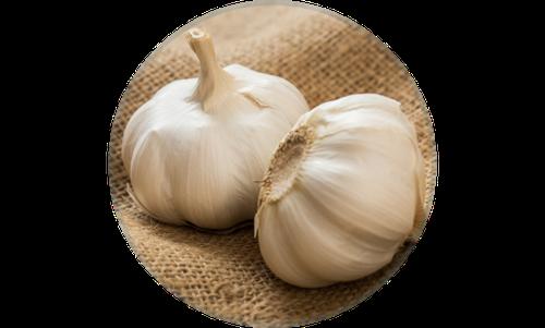 Solecard-garlic.png